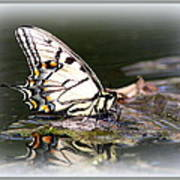 Floating In Water - Swallowtail -butterfly Art Print