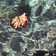 Floating Leaf Art Print