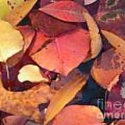 Floating Leaves Art Print