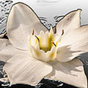 Floating Lily Art Print