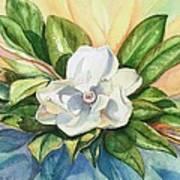 Floating Magnolia Art Print