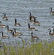 Flock Of Canada Geese   #7116 Art Print