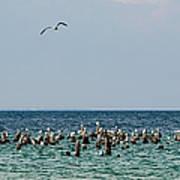Flock Of Seagulls Art Print