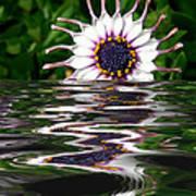 Flooded Flower Art Print