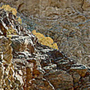 Flora In Sunlight In Big Painted Canyon Trail In Mecca Hills-ca Art Print