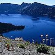 Flora Of Crater Lake Art Print