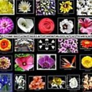 Floral Composite Not For Sale Art Print