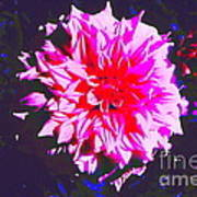 Floral Coral Art Print