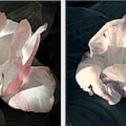 Floral Duo Art Print