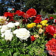 Floral Gardens Art Print