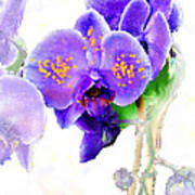 Floral Series - Orchid Art Print