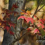 Florida Autumn Leaves Art Print