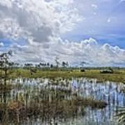 Florida Everglades 0173 Art Print