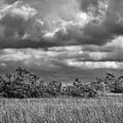 Florida Everglades 0184bw Art Print