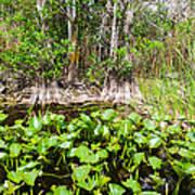 Florida Everglades Art Print