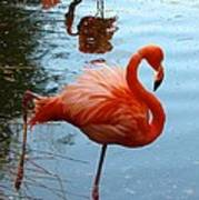 Florida Flamingo Art Print