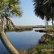Florida Marshland Art Print