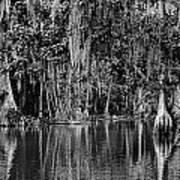 Florida Naturally 2 - Bw Art Print