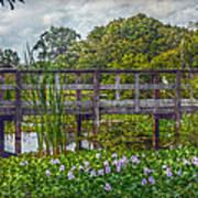 Florida Nature Art Print