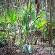 Florida Palmetto Bush Art Print