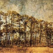 Florida Pine 4 Art Print