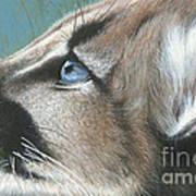 Florida Princess Art Print