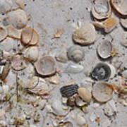 Florida Seashells Art Print