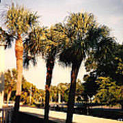 Florida Trees 2 Art Print