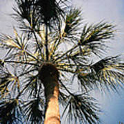 Florida Trees Art Print