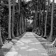 Florida Walkway Black And White Art Print