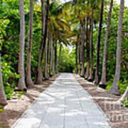 Florida Walkway Art Print