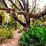 Florida Woods Art Print