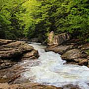 Flow Of Forest Zen Art Print