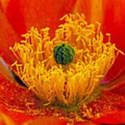 Flower 108 Art Print