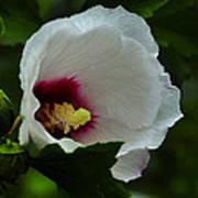 Flower 157 Art Print