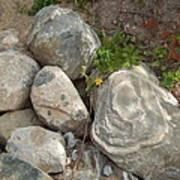 Flower And Rocks Art Print