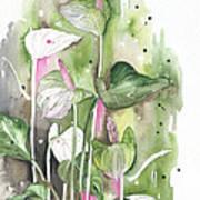 Flower Anthurium 04 Elena Yakubovich Art Print