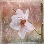 Flower Art - Nature Reminds Us Art Print