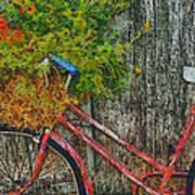 Flower Basket On A Bike Art Print