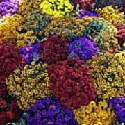 Flower Bed Across The Street From The Grand Palais Off Of Champs Elysees  Art Print