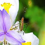 Flower Bug - I Art Print