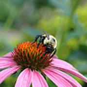 Flower Bumble Bee Art Print