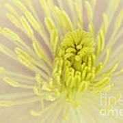 Flower Centre Art Print