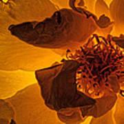 Flower Close Up IIi Art Print