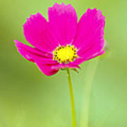 Flower - Closeup Art Print
