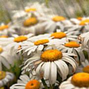 Flower - Daisy - Not Quite Fresh As A Daisy Art Print