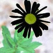 Flower - Daisy - Photopower 327 Art Print