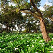 Flower Field - South Western Australia Art Print