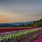 Flower Fields 2 Cropped Into A Standard Ratio Art Print