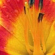 Flower Garden 03 Art Print
